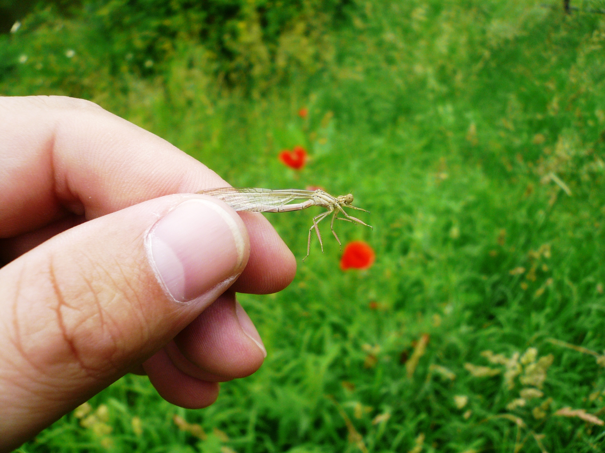 Vážka a lidská ruka