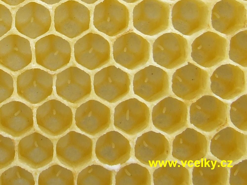 Včelí vajíčka na plástu