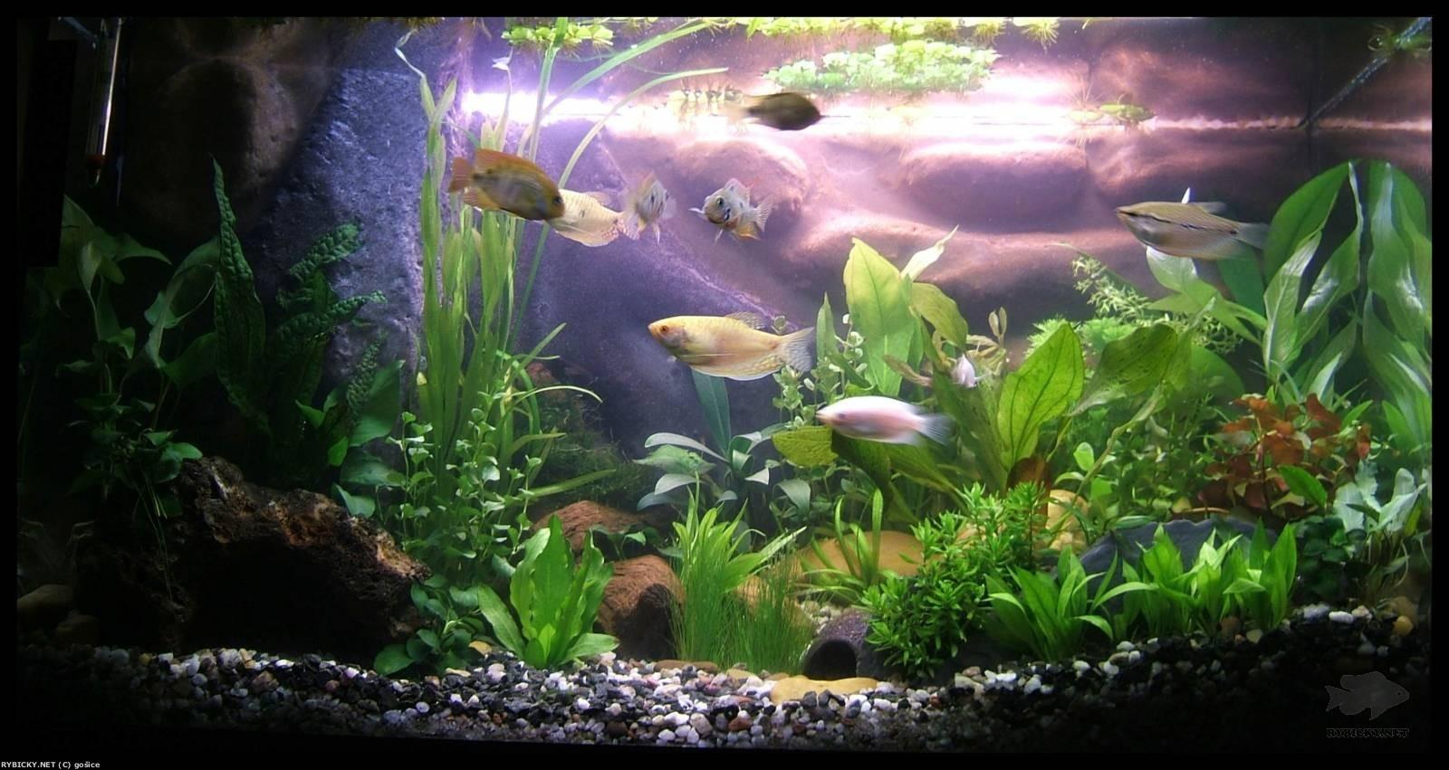akvarijní živočichové