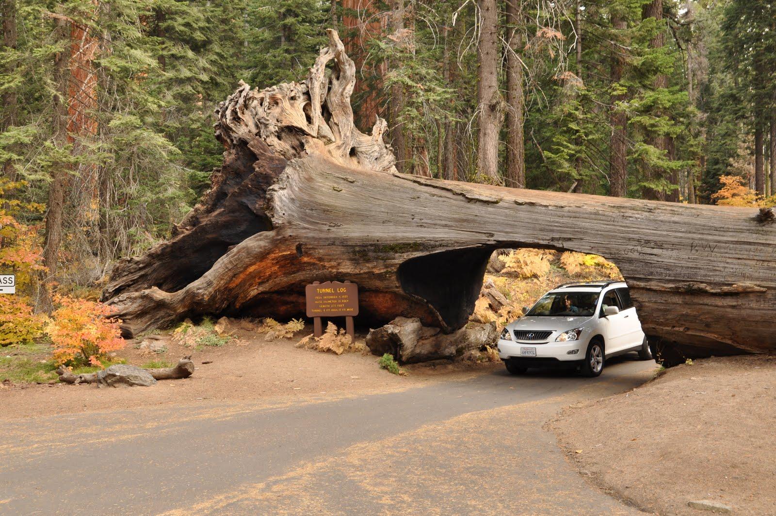 kSequoia-101106-114510.jpg