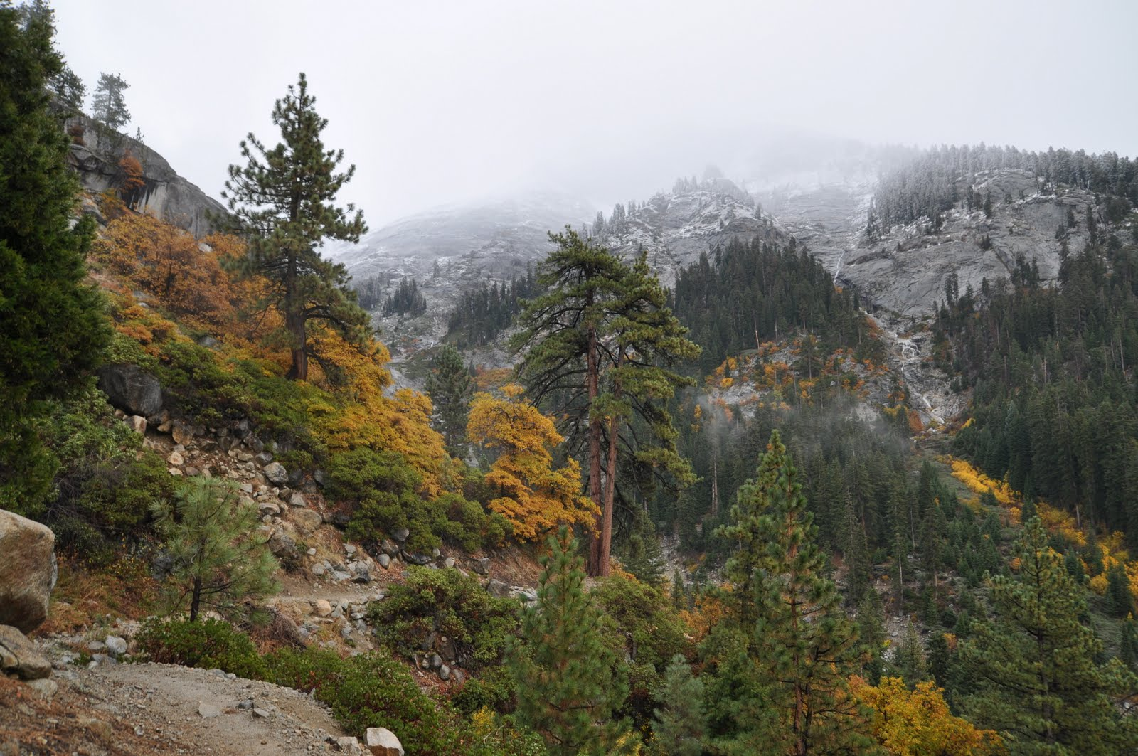 kSequoia-101106-171743.jpg