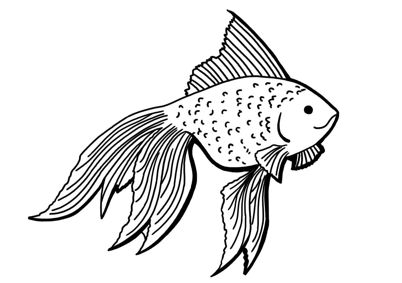 rybicka.jpg
