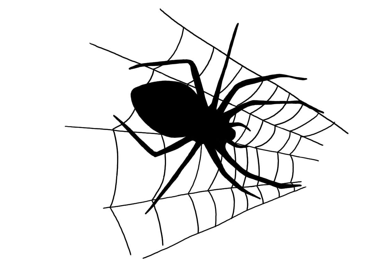 pavouk_pavucina_MK.jpg