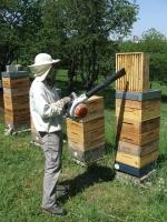 vyfukování včel.jpg