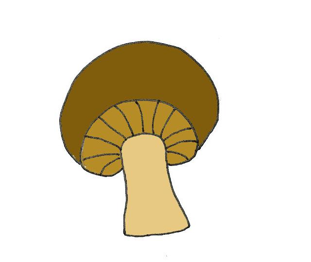 B-houba.jpg