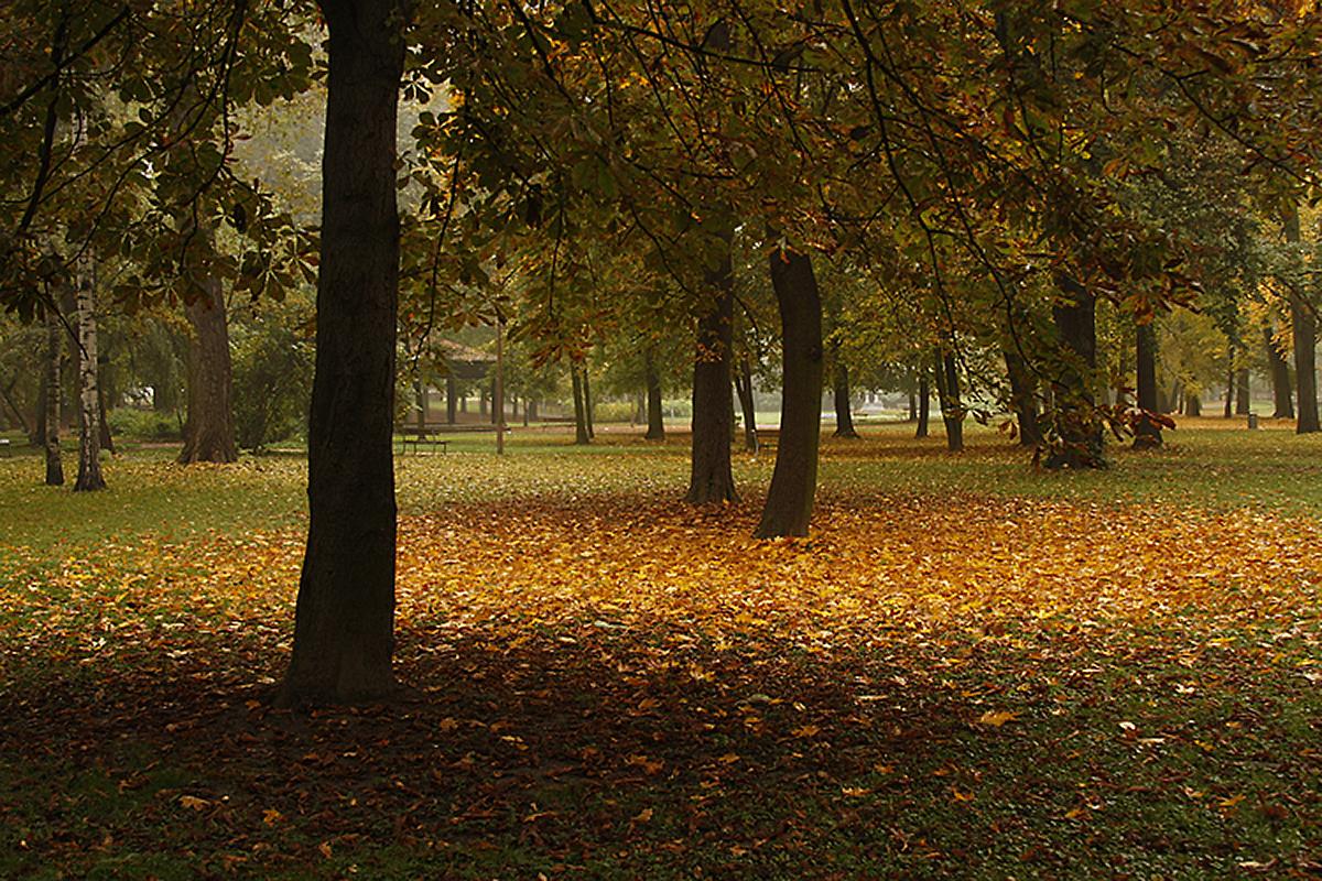 podzim-v-parku.jpg