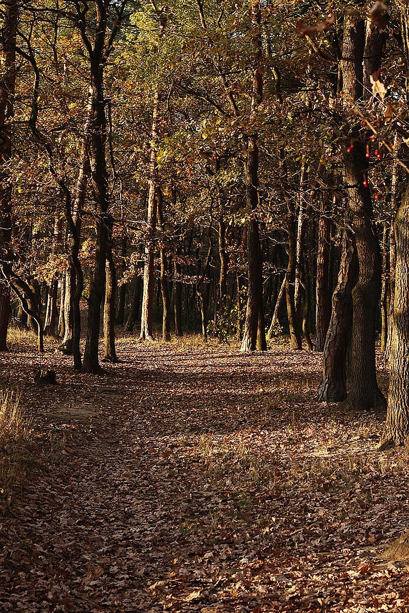 podzimni-cesta-lesem1.jpg