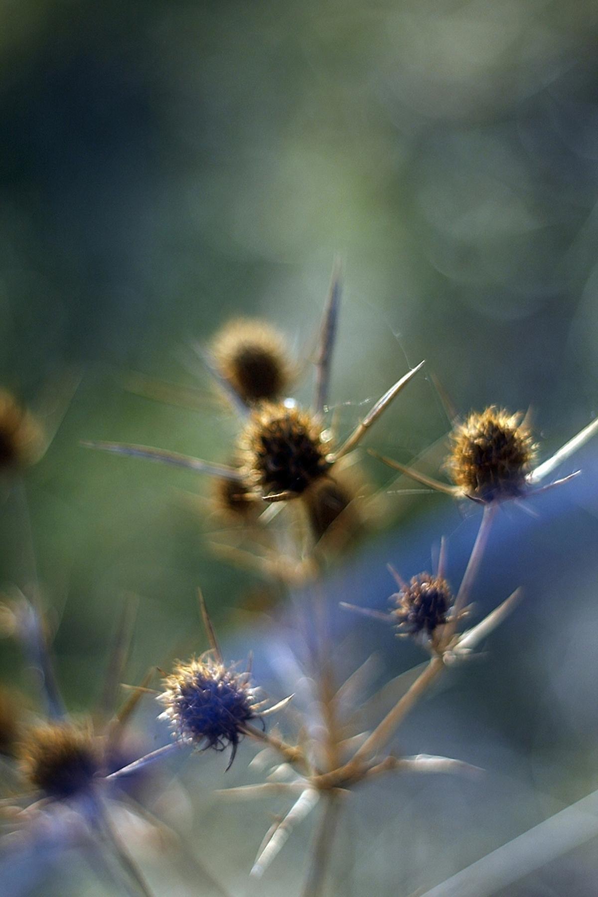 podzimni-detail-bodlak.jpg