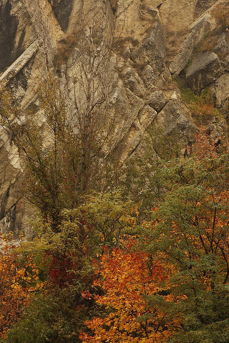 podzimni-stromy-u-skaly.jpg