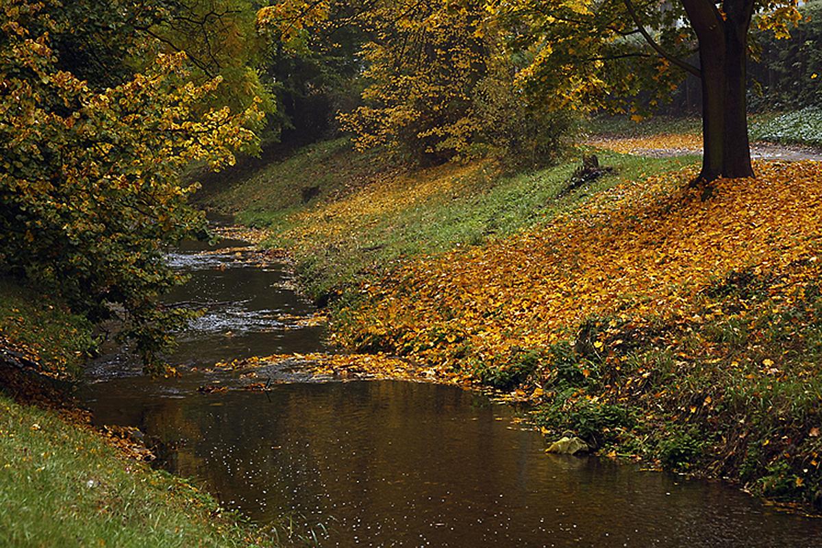 potok-v-parku.jpg