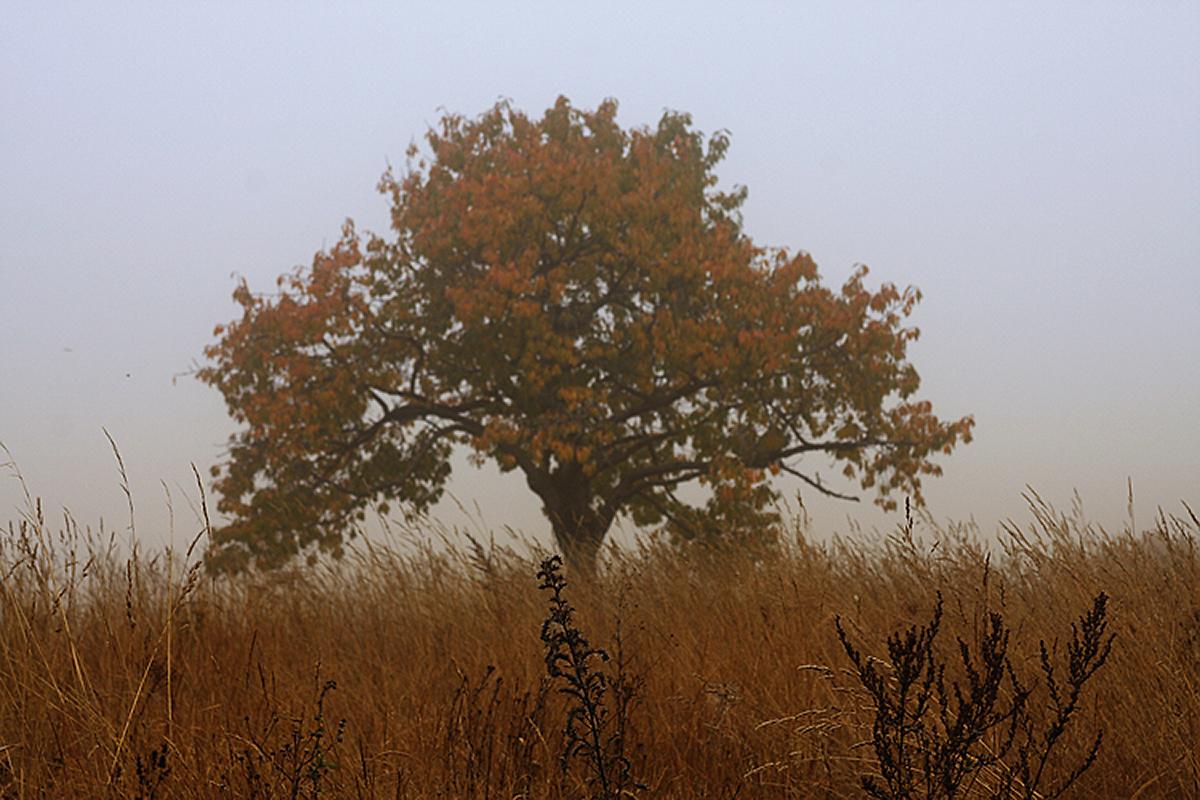 osamělý strom