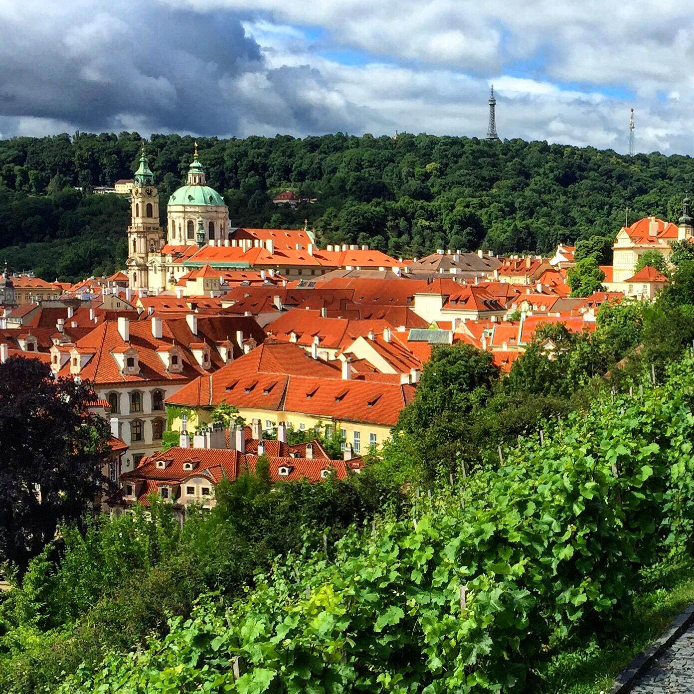 Vinice sv. Václava