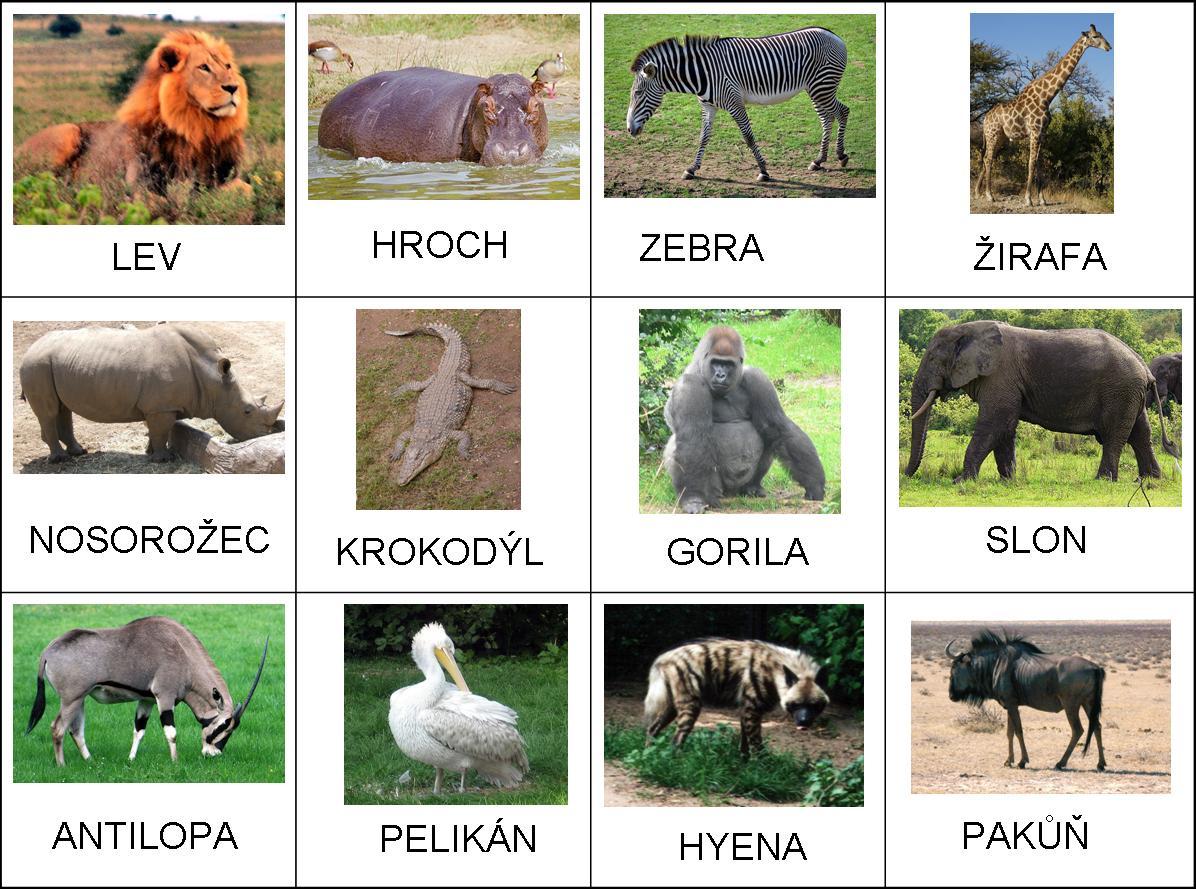 AFRICKÁ ZVÍŘATA.jpg