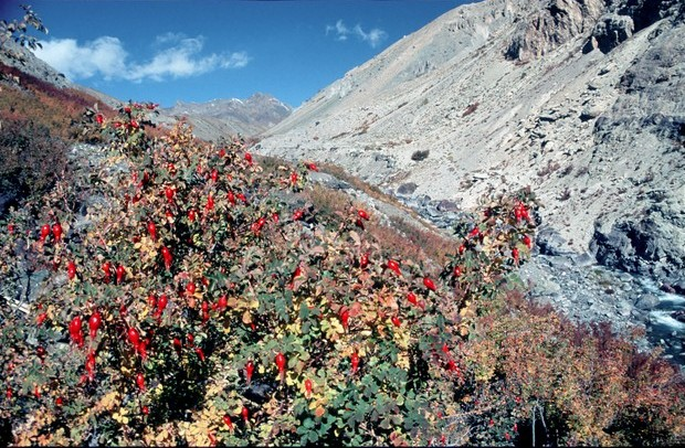 šípky v Zanskaru