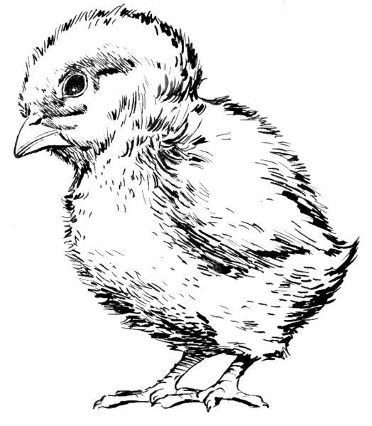 524px-Chick_(PSF).jpg