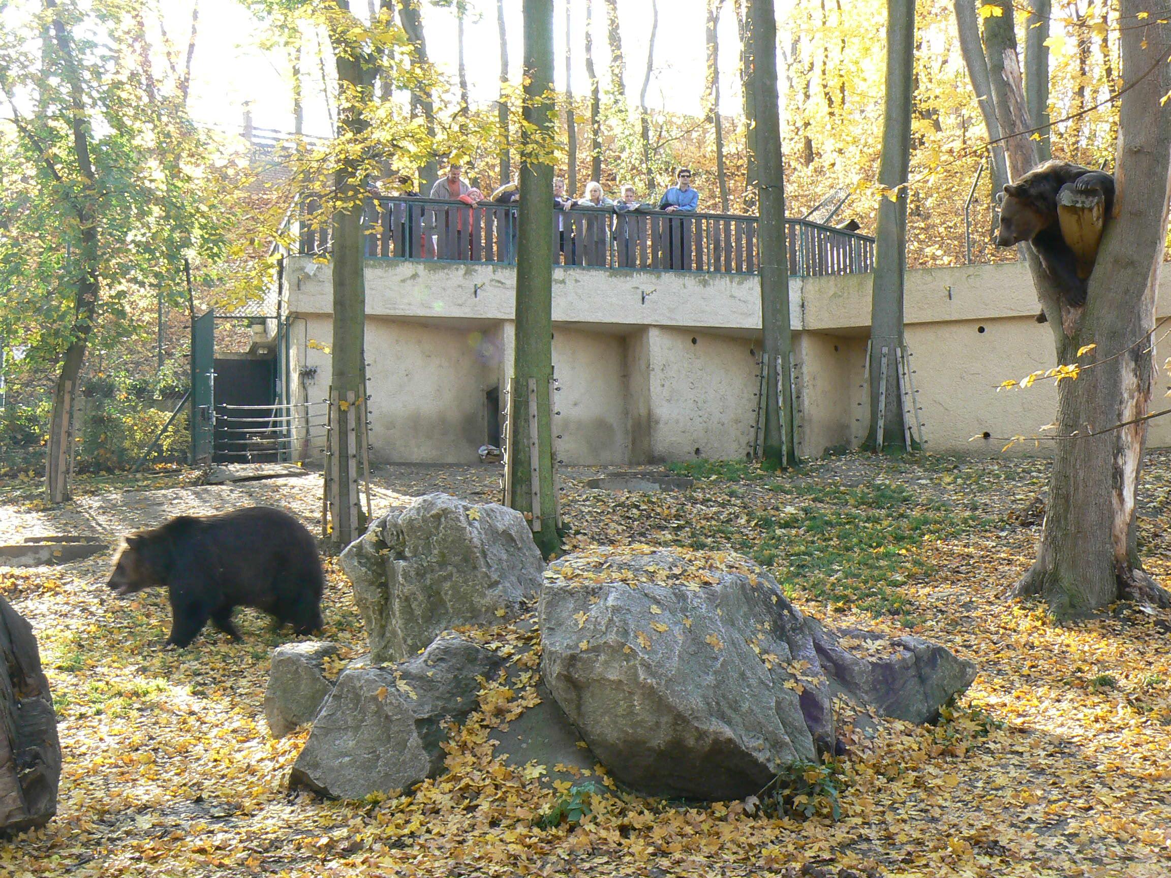 medvědárium.JPG