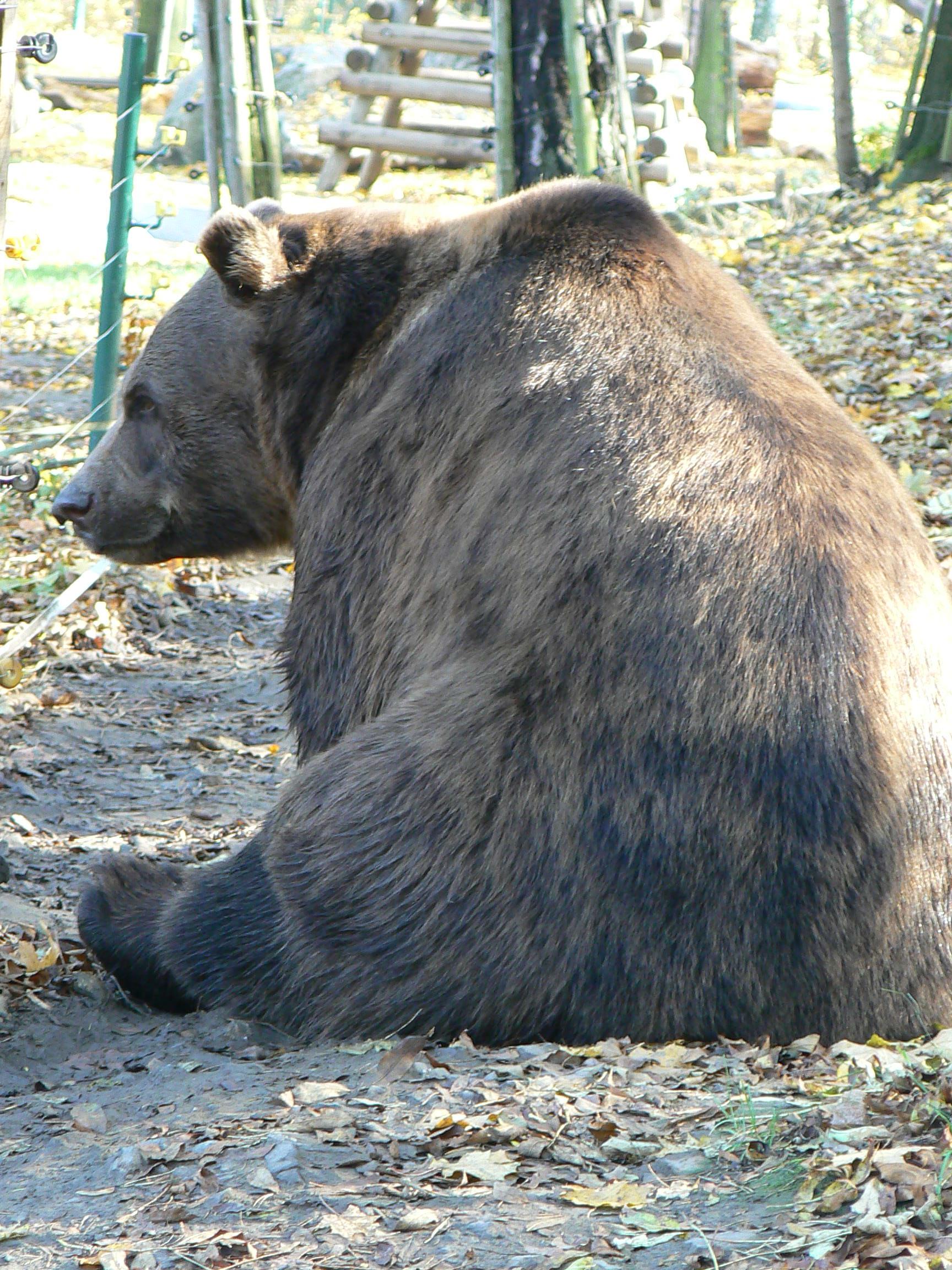 medvěd.JPG