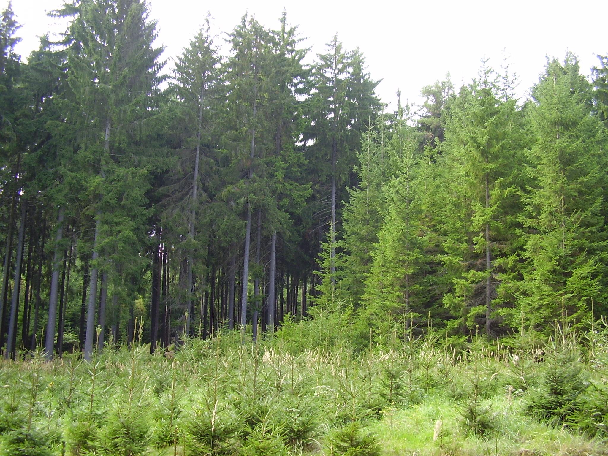 Tři generace lesa
