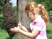 Včely jsou mírumilovné k tomu, kdo to s nimi opravdu umí.