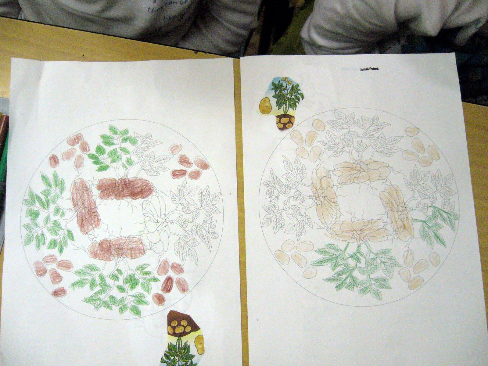 bramborovy_den-15.JPG